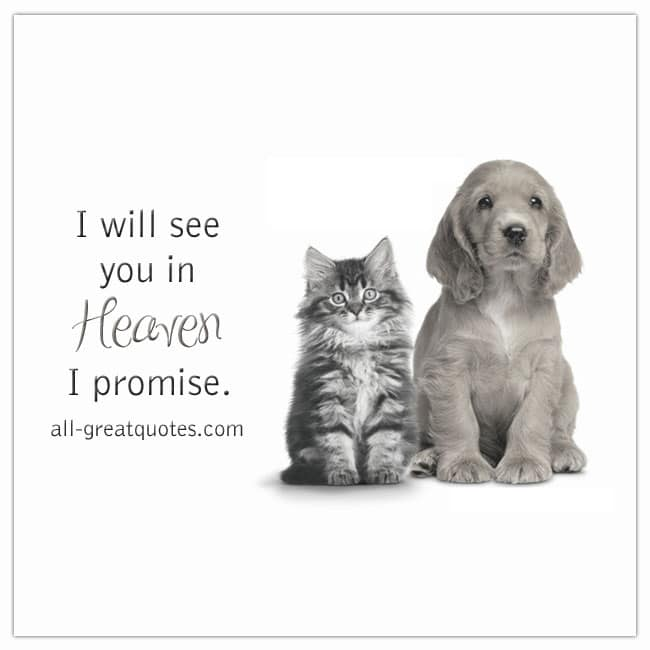 I Will See You In Heaven I Promise Pet Loss Grief Cards