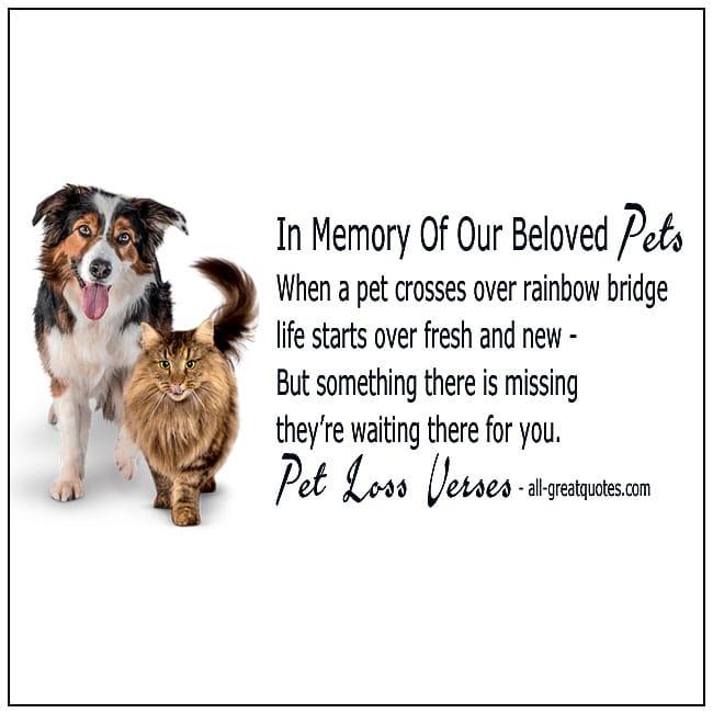 Pet Loss Verses Cat Loss Dog Loss Poems