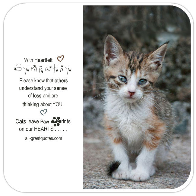With-heartfelt-sympathy-Cats-leave-paw-prints-on-our-hearts