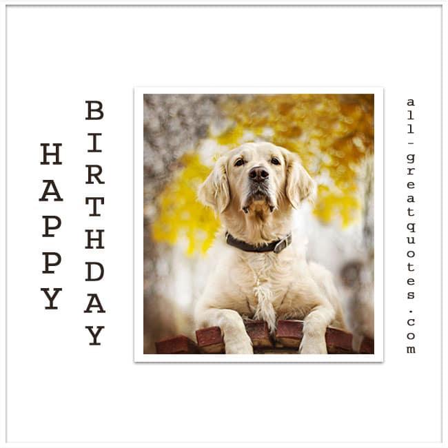 happy-birthday-free-birthday-cards