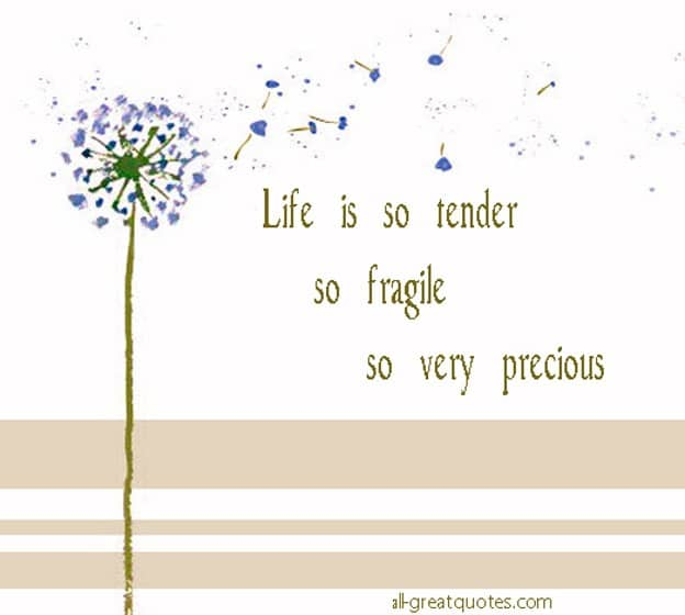 Life Is Precious Quotes Beauteous Is So Tender So Fragile So Very Precious
