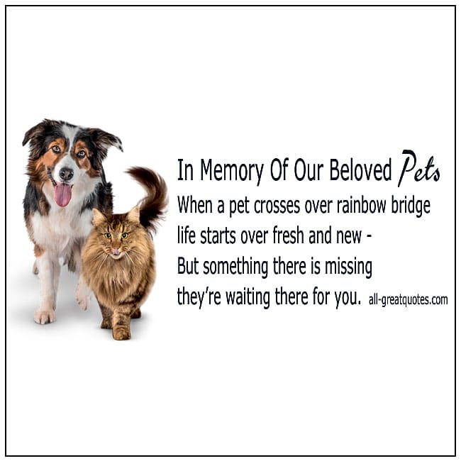 In Memory Of Our Beloved Pet When A Pet Crosses Over Rainbow Bridge