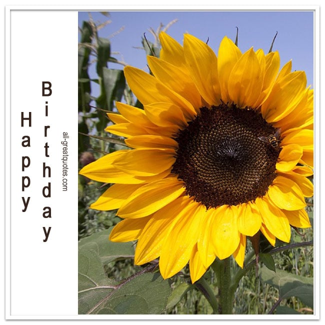 Happy Birthday Sunflower Free Birthday Card