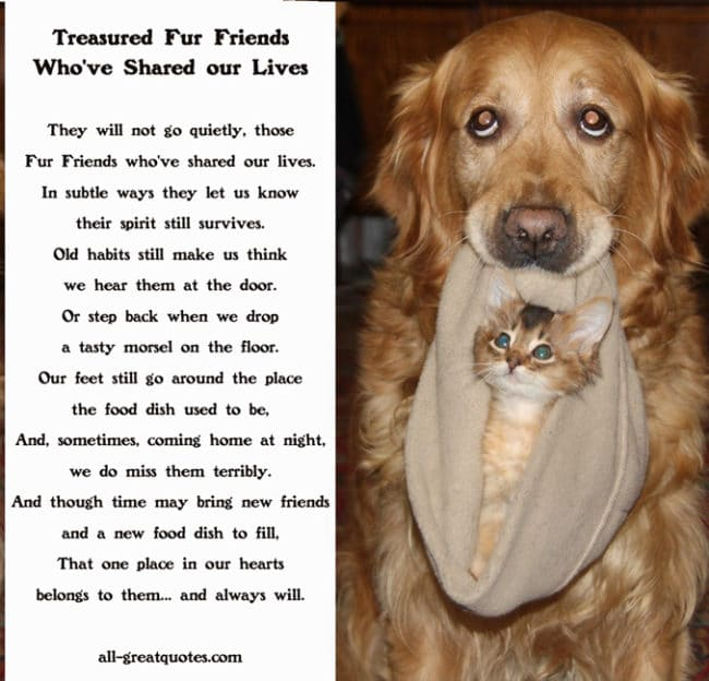 In Loving Memory Pets Cards Treasured Pets Who've Shared our Lives
