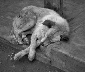 STREET-DOG-SAD