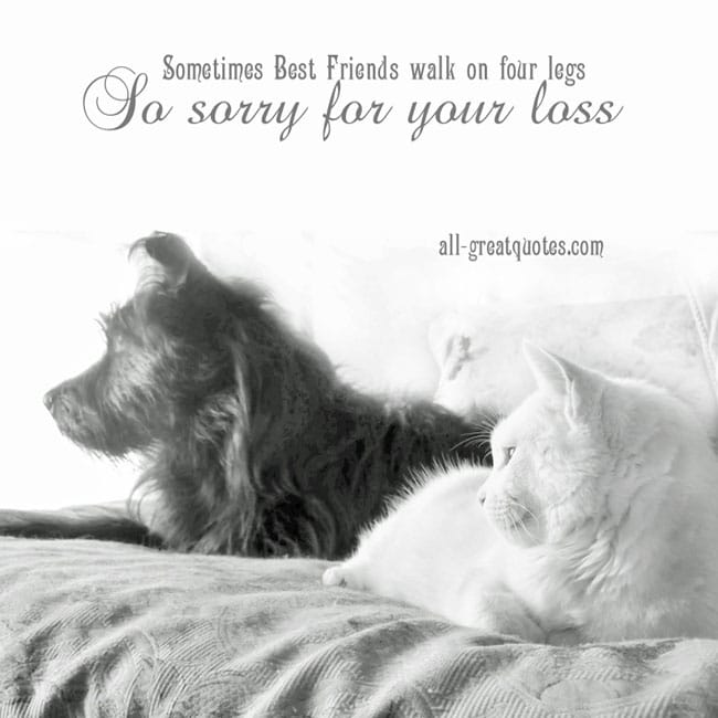 Sympathy Cards For Pets | Sometimes - Best Friends walk on four legs.