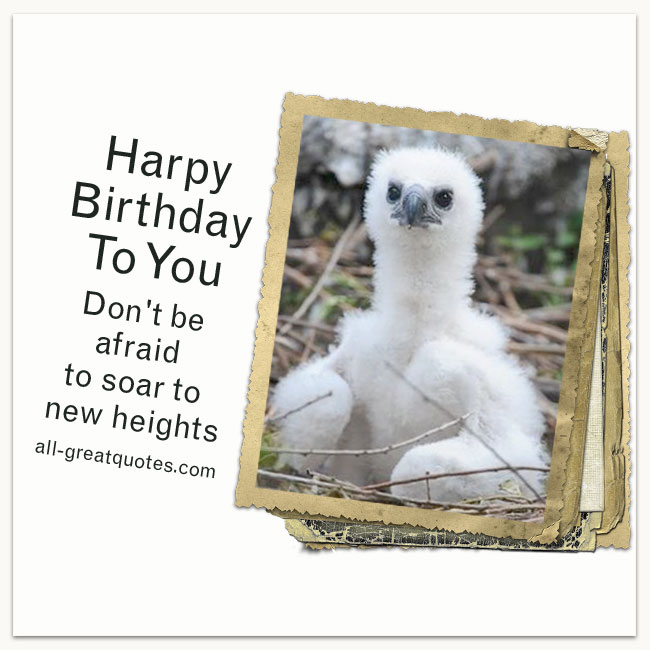 Harpy Birthday To You Don't be afraid to soar to new heights Free Birthday Quote Cards Harpy Eagle Chick