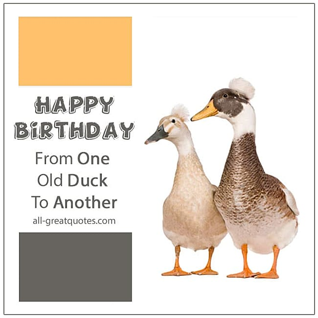 Happy Birthday From One Old Duck To Another Funny Old Ducks Birthday Card