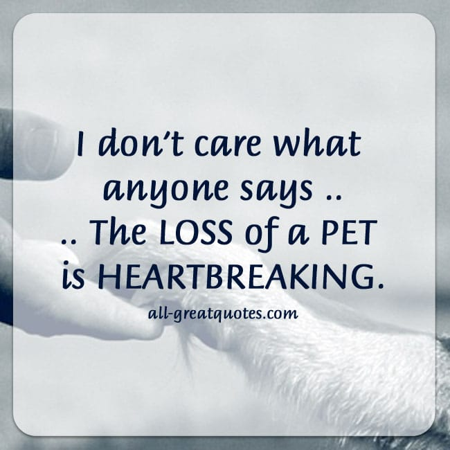 I don't care what anyone says The LOSS of a PET is HEARTBREAKING.